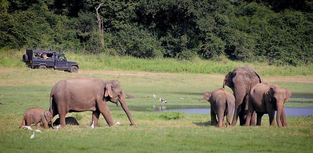 Elephanten Sri Lanka