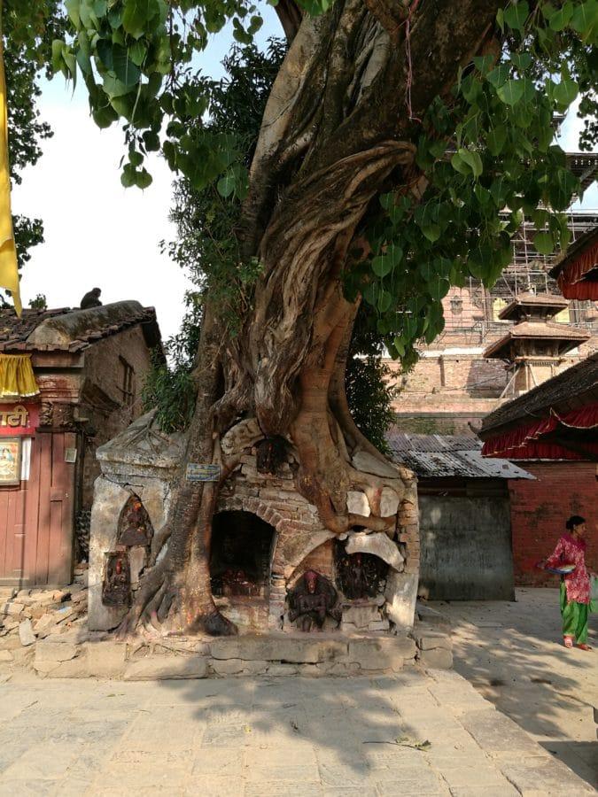 Baum-Tempel