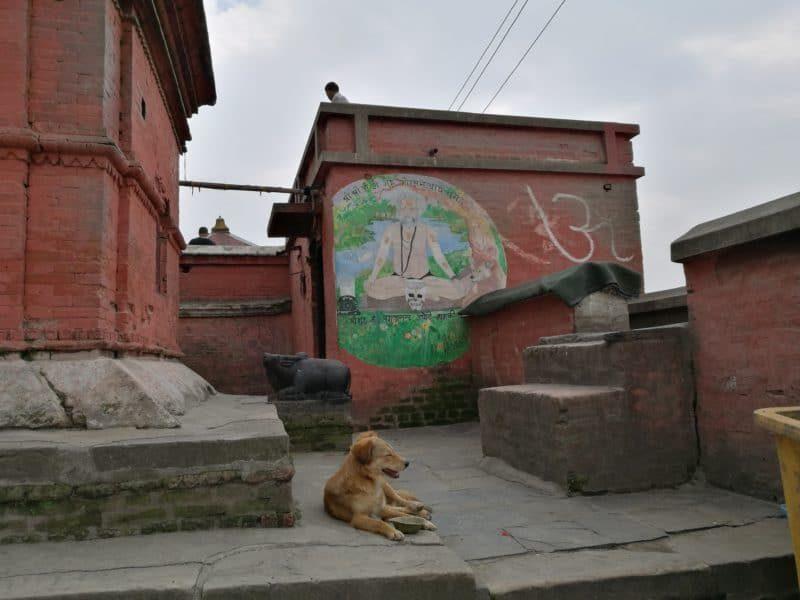 Hund am Pashupatinath