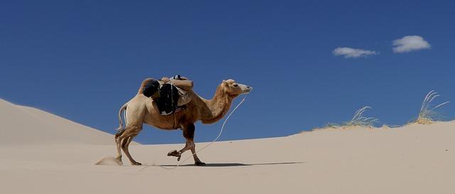 Mongolei Wüste